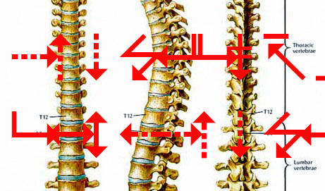 spinal illustration